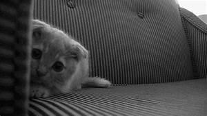 Gif Animé Doigt D Honneur : gif humour chaton gifs anim s humoristiques de chatons ~ Medecine-chirurgie-esthetiques.com Avis de Voitures