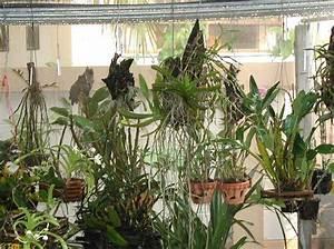 Hortensien Kombinieren Mit Anderen Pflanzen : orchideen erfolgreich pflegen pflanzenfreunde ~ Eleganceandgraceweddings.com Haus und Dekorationen