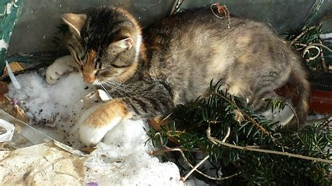Animal Rescue Group Finds Cat That Froze To Death Urges Safety Ground Report