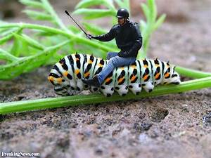 Funny Caterpillar Pictures