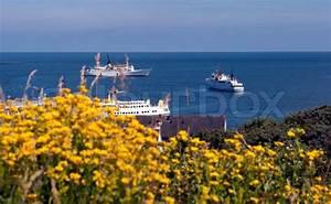 Blumen In Der Box : gelbe blumen und ferry service in der n he von helgoland insel in der nordsee stockfoto ~ Orissabook.com Haus und Dekorationen