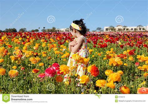 girl   flower field stock image image  garden