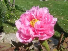 les fleurs du jardin album photos le petit de