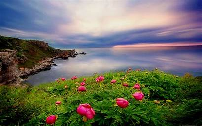 Desktop Ocean Computer Landscape Flowers Vegetation Coastal