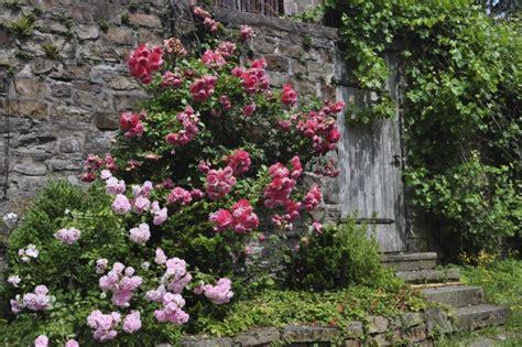 Herbst Garten Schneiden by Schneiden Im Herbst Rosenschnitt Im Herbst