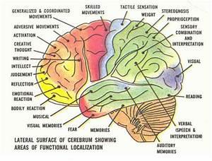 Brain Jack Image  Brain Function Chart