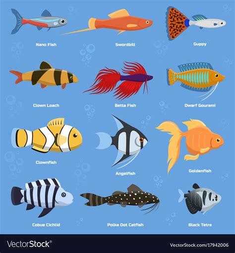 aquarium  ocean fish breeds underwater bowl vector image