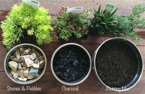miniature terrarium garden be a