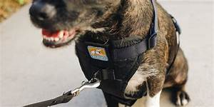 The Best Dog Harness  Reviews By Wirecutter