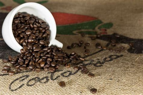 But with hundreds of brands available for purchase online, how do you make sure you're buying the best. Costa Rican Tarrazu Region Coffee Beans | Costa rica coffee, Costa rican food, Costa rica