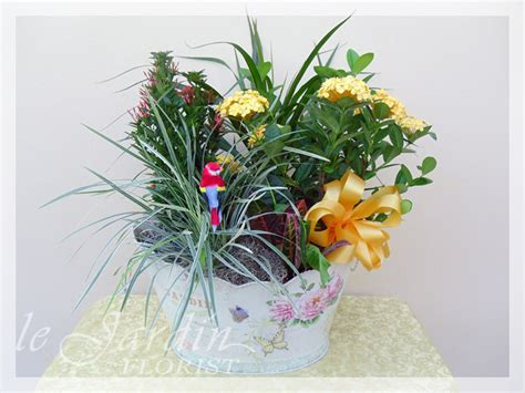 13 flower delivery palm gardens orchids and