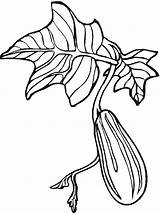 Cucumber Coloring Pages Printable Vegetables Turnip Recommended Getdrawings Getcolorings Mycoloring sketch template