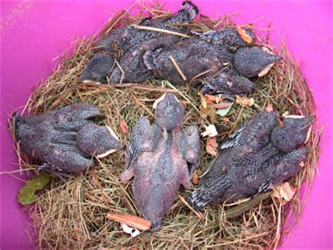 katdoc s world purple martin nest changes