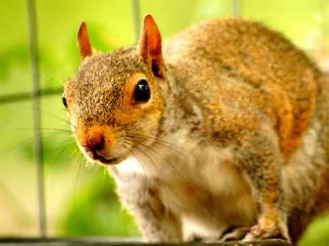 Georgia Piedmont Region Animals