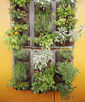 Images Of Vertical Gardens by How To Grow A Vertical Garden Real Simple