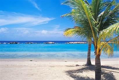 Vakantie Palm Cbd Aruba Strand Reis Reisen