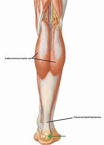 Colum U2019s Legs And Other Things  Too   U2013 Outlander Anatomy