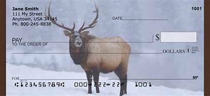 Elk Checks Rocky Personal Mountain
