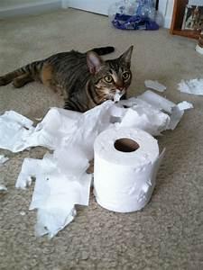 242 best Cats shredding TP... images on Pinterest | Funny ...