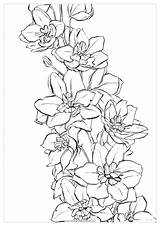 Watercolor Coloring Pages Delphinium Flower Water Flowers Adults Drawing Larkspur Tattoo July Printable Bright Polina Sketches Birth Swiss Jamaica Honduras sketch template