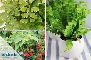 Pflanzen Wenig Licht : diese zimmerpflanzen brauchen nur wenig licht liste ~ Markanthonyermac.com Haus und Dekorationen