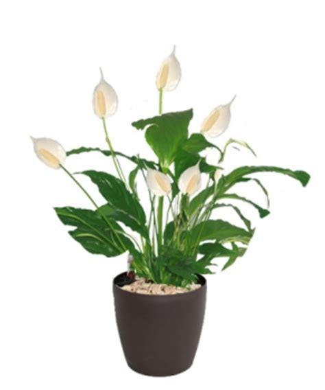 les plantes dédiées pour la décoration d un bureau