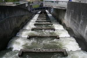 Fish Ladder Bonneville Dam Bonneville Dam Fish Ladders
