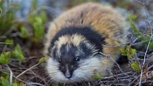 Animales Que Se Ven Inofensivos Pero Que Son Peligrosos