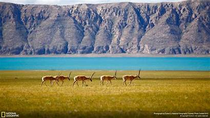 Geographic National Desktop Backgrounds Wallpapers 1920 Animal
