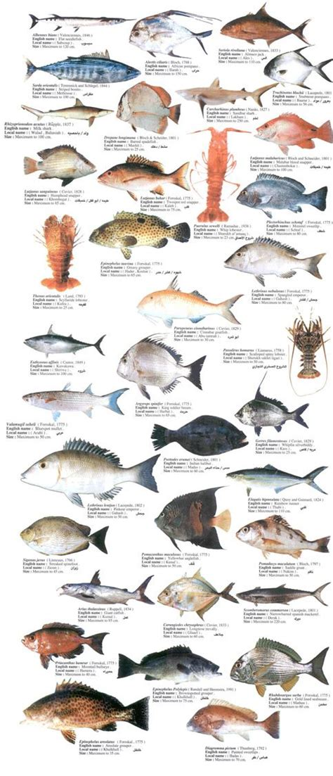 fishes google search list  animals sea fish