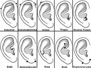 Diagram Of Wolf Ears