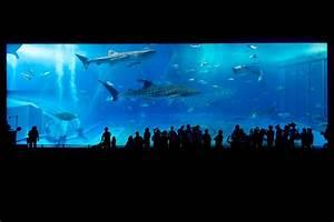 Glasstärke Aquarium Berechnen : aquarium glas alle infos von der st rke bis zum schneiden ~ Haus.voiturepedia.club Haus und Dekorationen