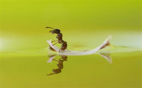 ant hd wallpaper background image  id