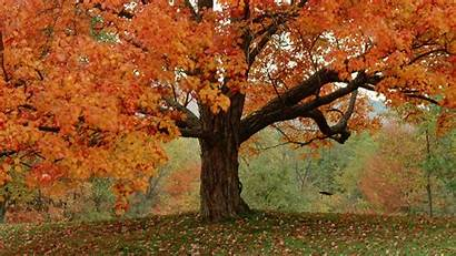 Trees Autumn Vermont Fall Tree Leaves Wallpoper