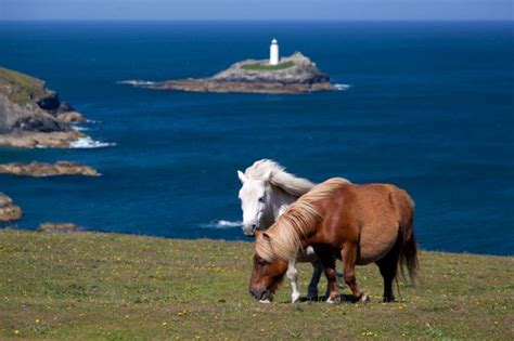 Godrevy Photos | Cornwall Guide