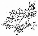 Coloring Blueberry Bush Pages Drawing Vitamin Drawings Muffin Printable Getdrawings Getcolorings sketch template
