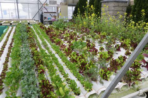 hydroponics supplies grow systems   eco friendly