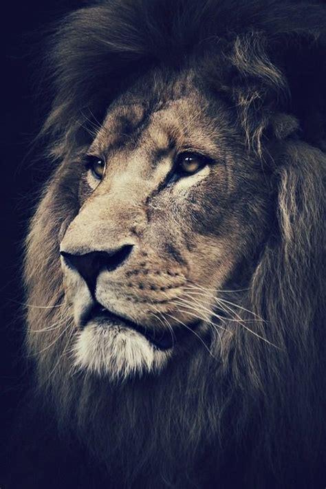 Die 25+ Besten Ideen Zu Löwin Tattoo Auf Pinterest Löwe