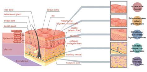 collageen huid stimuleren