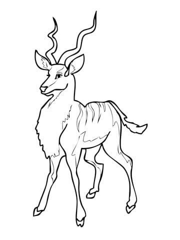 kudu antelope coloring page supercoloringcom