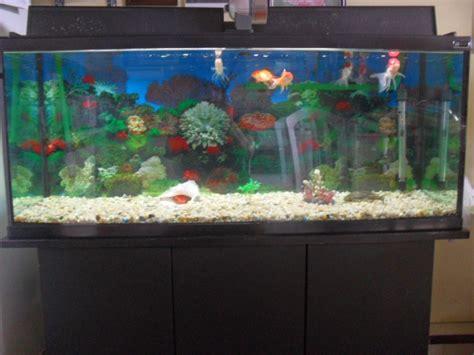 jeux de poisson dans un aquarium jeux de poissons aquarium 28 images jouet pour le bain poisson pour le bain achat vente