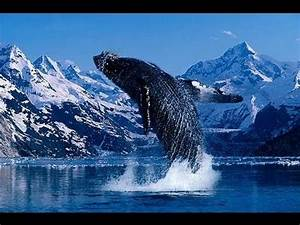 Our Incredible Beautiful World (Amazing nature footage and ...