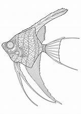 Fish Angel Coloring Vector Drawn Premium sketch template