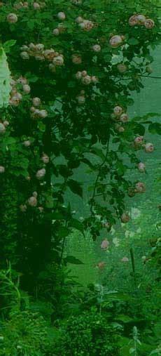 Der Garten Als Sinnbild by Allgemein