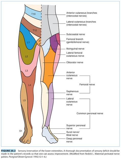 Femoral Cutaneous Nerve Compression