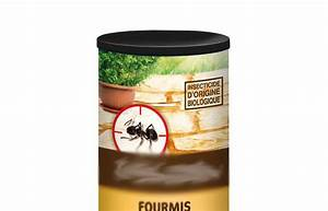 Anti Fourmi Naturel : les 9 meilleurs pi ges pour lutter contre les fourmis ~ Carolinahurricanesstore.com Idées de Décoration