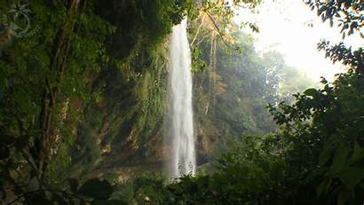Rainforest Jungle Waterfall Tropical Nature Birds Ambience