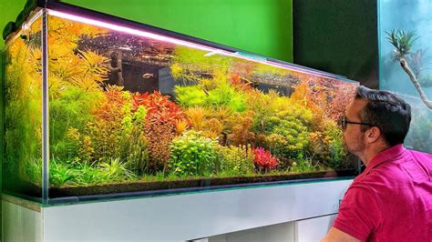 Aquascape Store by Beautiful Aquascape Store In Poland Green