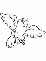 Parrot Coloring Pages Printable Animals Flying Parrots Parakeets Birds sketch template