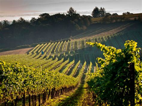 Evening Land Vineyards - Skurnik Wines